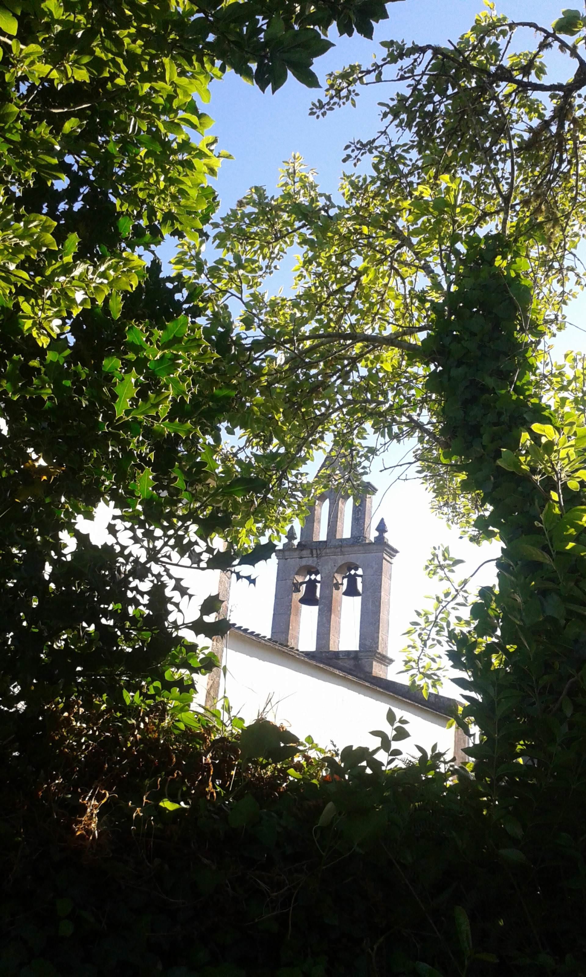 church, bell tower, temple, nature, garden, tree, house of god, house of prayer