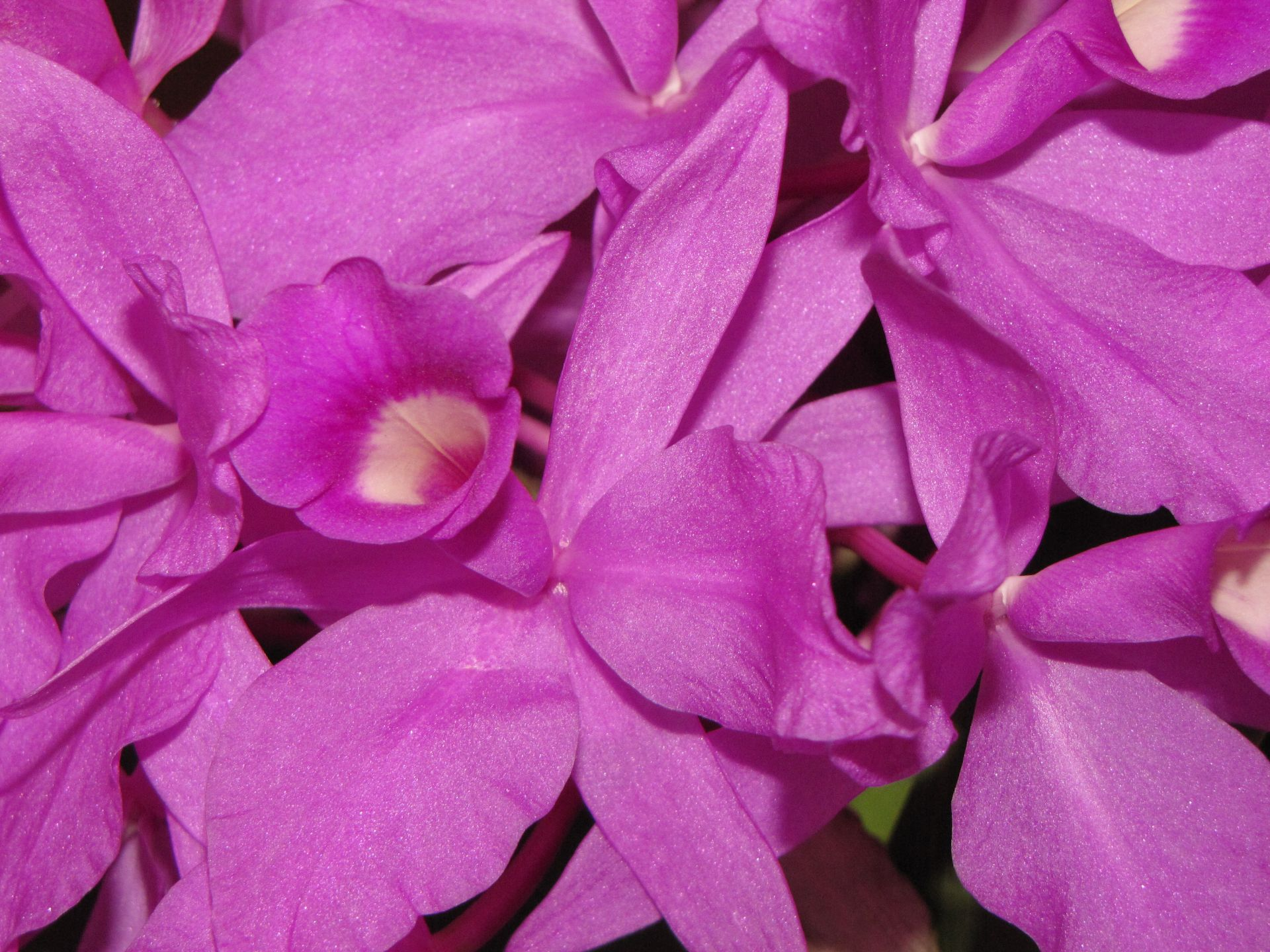 nature, flowers, purple, orchids, flora, plants, violet, purple, magenta