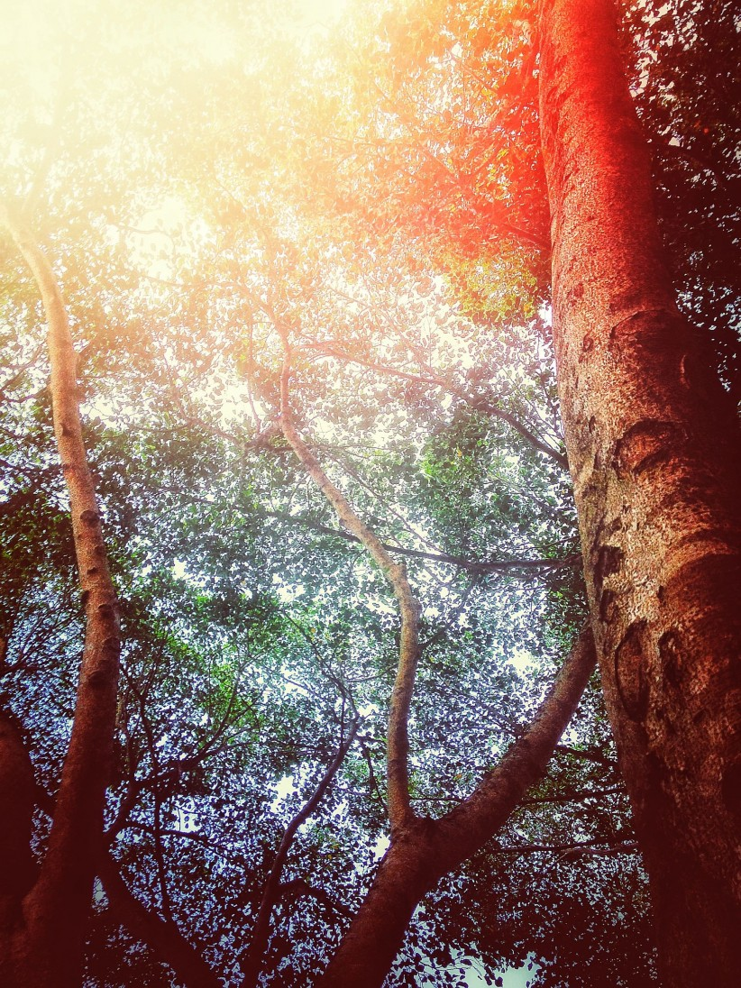 sky, contemplacion, nature, worship, sun, leaves, green, trees