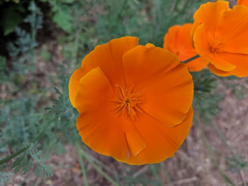 flower, garden, nature, beauty, orange