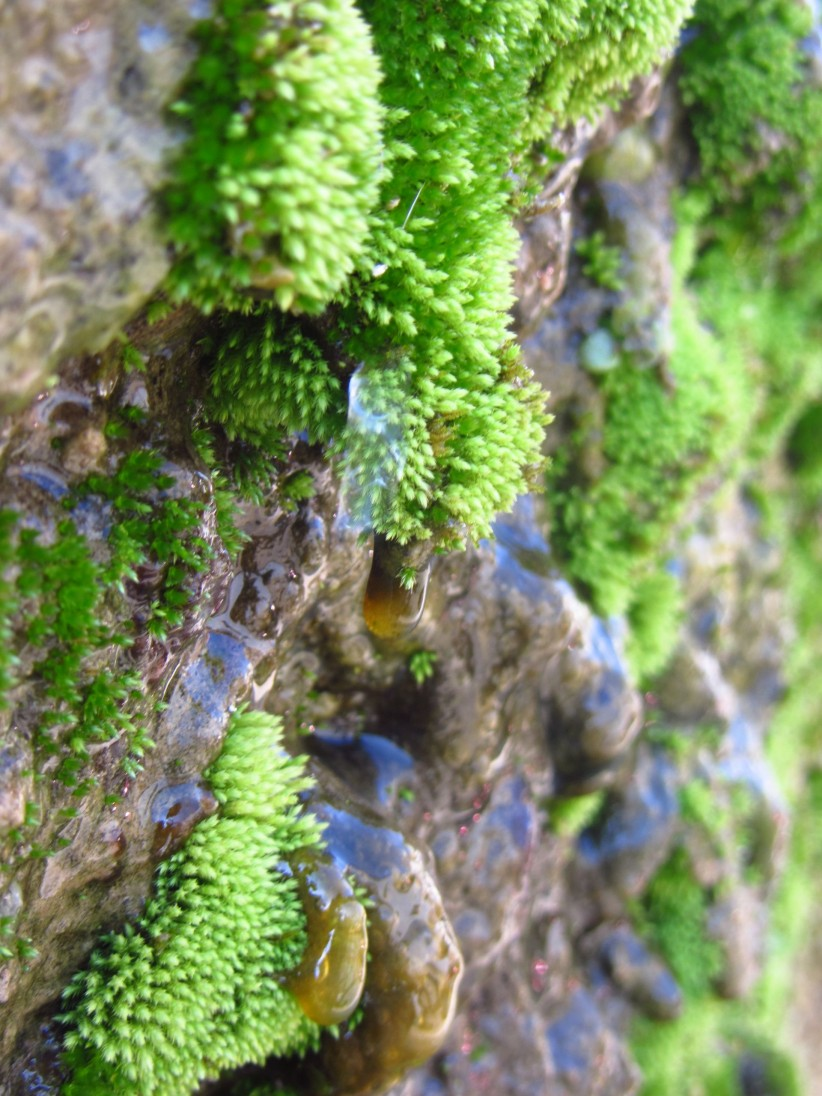 creation, water, nature, rock, moss, drop