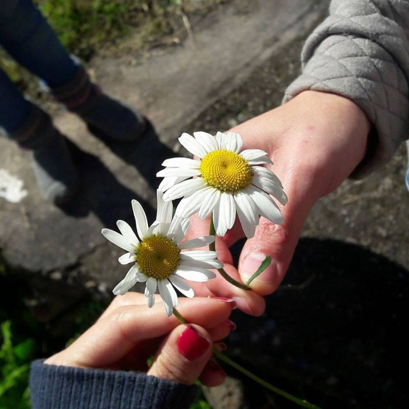 hands, path, flower, nature, flowers, god, friendship, contemplate