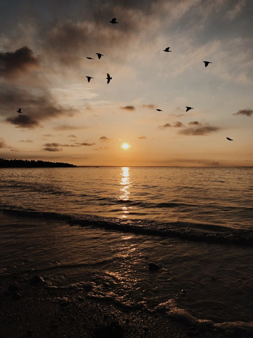 beach, waves, sea, sunset, ave, sunset, bird